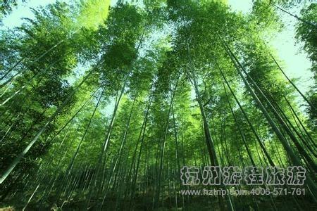 大余县丫山风景区